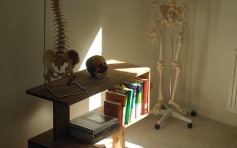 skelett-768x1024